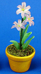 Click here to enlarge image and see more about item n02544: Dollhouse Miniature Flower in Clay Pot