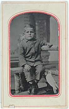 TINTYPE 1/6th PLATE – LITTLE BOY WITH BIRD. (Image1)