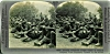Click to view larger image of STEREOVIEW - WWI GERMAN PRISONERS (Image2)