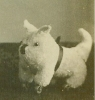 Click to view larger image of Little Guy with Dog Pull Toy C.1880's - Great (Image2)