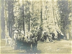 Click here to enlarge image and see more about item 4426: ANTIQUE PHOTO – GIANT REDWOODS BY CARRIAGE.