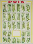 Antique French Seed Poster C.1900 - Pois means Peas
