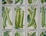 """Click to view larger image of Antique French Peas """"POIS"""" Poster C.1900 (Image2)"""
