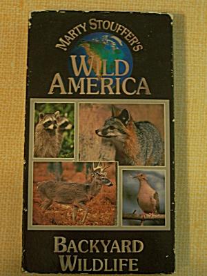 Wild America   Backyard Wildlife (Image1)