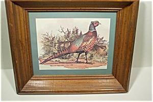 Pheasant Print (Image1)