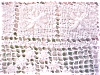 Click to view larger image of Lace Tablecloth Beautiful Pattern (Image4)