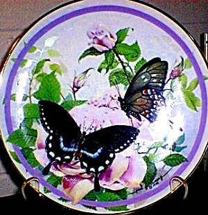 1987 Spicebush Swallowtail : #1 Butterfly Garden Paul J. Sweany Vibrant Swallow Tail