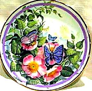 1987 COMMON BLUE : BUTTERFLY GARDEN Paul J. SWEANY Butterflies (Image1)