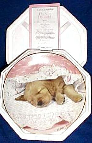 Golden Puppy Portraits DO NOT DISTURB! P. Braun Hamilton brown cocker lab golden retr (Image1)