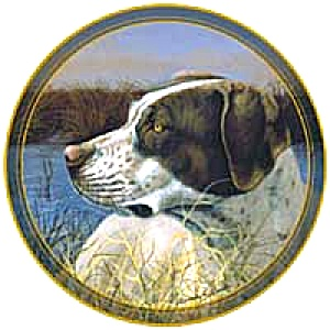 Gunnar German Short-haired Pointer Hunting Dog From Islandia