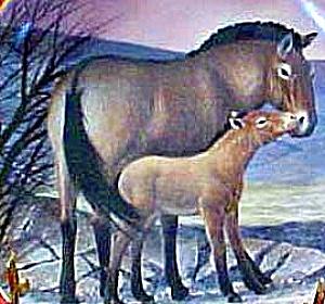 Przewalski's Horse Last of Their Kind Endangered Species W.Nelson BradEx 84-G20-15.10 (Image1)