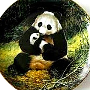 Panda Last of Their Kind : The Endangered Species Will Nelson Bradford Ex 84-G20-15.1 (Image1)