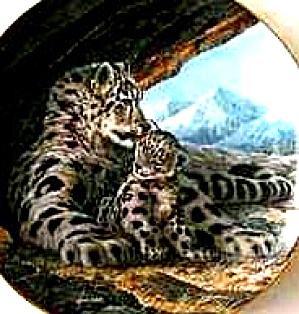 Snow Leopard Last of Their Kind The Endangered Species Will Nelson BradEx 84-G20-15.2 (Image1)