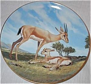 Slender-Horned Gazelle Last of Their Kind Endangered Species Nelson BradEx84-G20-15.5 (Image1)