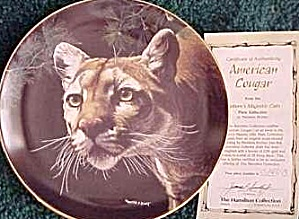 AMERICAN COUGAR - NATURE'S MAJESTIC CATS - M. Richter (Image1)
