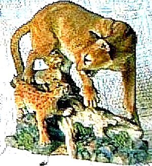 Nature's Majestic Cats  Cougar and Cubs British Artist David Geenty Endangered Animal (Image1)