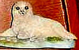 Protect Nature's Innocents Fur Seal Endangered Species Animal base Hamilton R Manning (Image1)