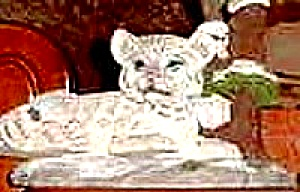 Protect Nature's Innocents Snow Leopard Endangered Species Animal Hamilton Manning Bs (Image1)