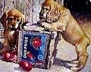 DOUBLE TAKE COCKER SPANIEL PUPPY PLAYTIME Jim Lamb River Shore Our Pride Apple Parrot (Image1)