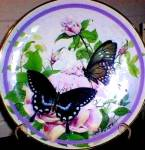 Click here to enlarge image and see more about item BUTTER1: 1987 SPICEBUSH SWALLOWTAIL : #1 BUTTERFLY GARDEN Paul J. SWEANY vibrant Swallow tail