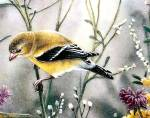 Click to view larger image of NATURE'S COLLAGE Lenox Golden Splendor Goldfinch Goldfinches Catherine McClung Birds (Image2)