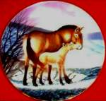 Click to view larger image of Przewalski's Horse Last of Their Kind Endangered Species W.Nelson BradEx 84-G20-15.10 (Image4)