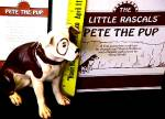 Click to view larger image of Little Rascals PETE THE PUP Joseph Sheryl Hoffman PETEY Ashton Drake 1 of 10 in Serie (Image5)