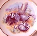 Click to view larger image of WILDLIFE OF BRITAIN BADGERS READER'S DIGEST SUSAN BERESFORD #79-367 Lilacs UK (Image1)