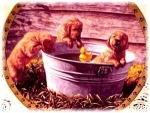 Water's Fine A World of Puppy Adventures Golden Retriever Jon Ren Hamilton MIBCOA '95