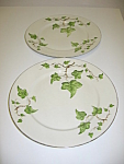 Click here to enlarge image and see more about item CDPGI01: Pencrest China Green Ivy Set of 2 Dinner Plates