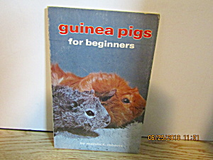 Guinea Pigs For Beginners