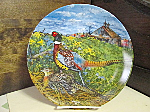 Upland Birds Of North America Plate The Pheasant