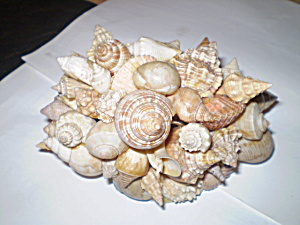 Antique 1950 SeaShell Paperweight (Image1)