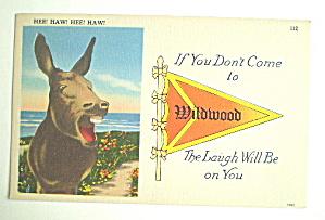 Comic Vintage Postcard - Hee Haw (Image1)