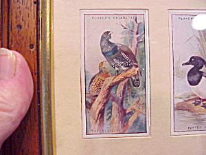 Framed Players Game Bird Cards (Image1)