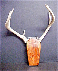 Western Folk Art - Mounted Antlers on Wood (Image1)