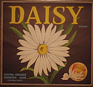 Daisy Orange Label (Image1)