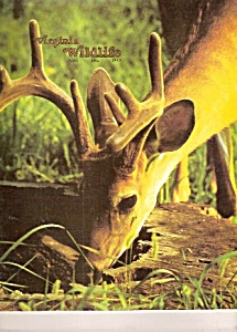 Virginia Wildlife -  May 1982 (Image1)