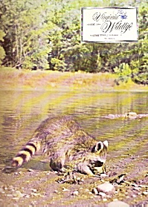 Virginia Wildlife -  August 1966 (Image1)