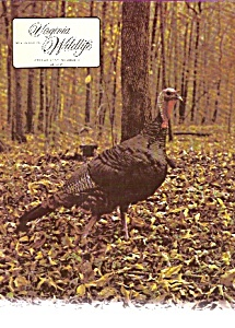Virginia Wildlife - November 1974