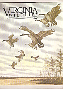 Virginia Wildlife -  October 1984 (Image1)