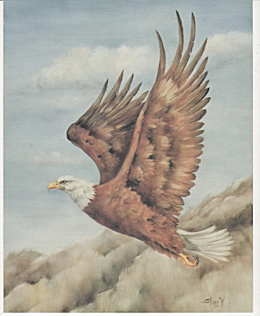Vintage - Skippy Clark - Bald Eagle In Flight - Oop
