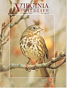 Virginia Wildlife -  March 1999 (Image1)