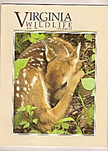 virginia Wildlife - June 1992 (Image1)