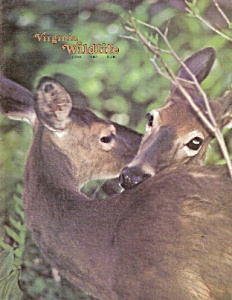 Virginia Wildlife - June 1981 (Image1)