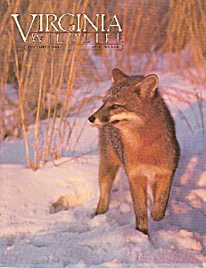 Virginia Wildlife - December 1984 (Image1)