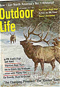 Outdoor Life   - November 1971 (Image1)
