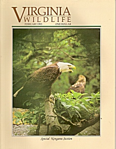 Virginia  Wildlife - February 1993 (Image1)