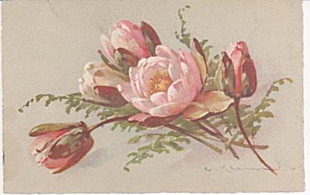 CATHERINE KLEIN~FLOWERS~POSTCARD~~STUDY (Image1)