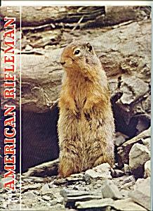 American Rifleman - May 1965 (Image1)